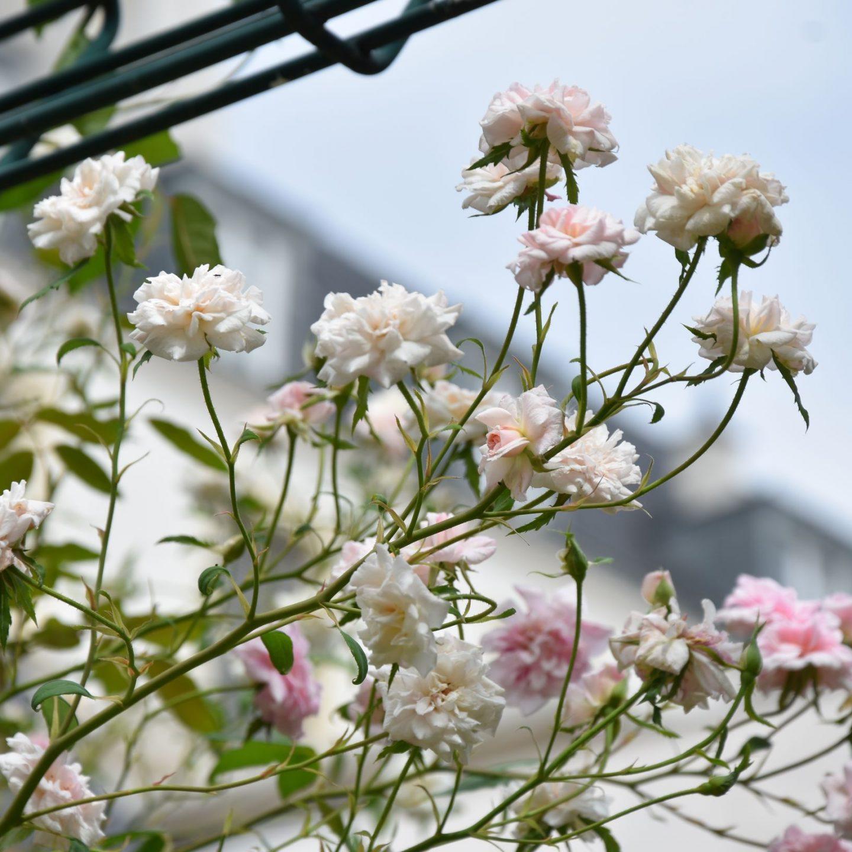 Il più piccolo giardino segreto del Marais