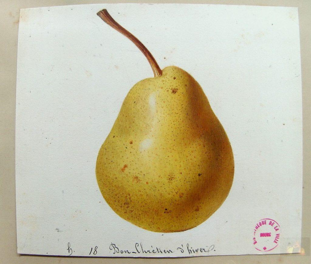 La pera Bon-Chrétien, coltivata al Potager du Roi