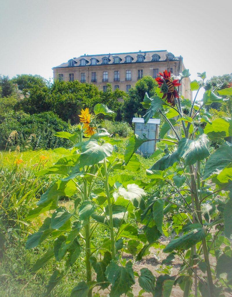Il giardino sperimentale del Potager du Roi