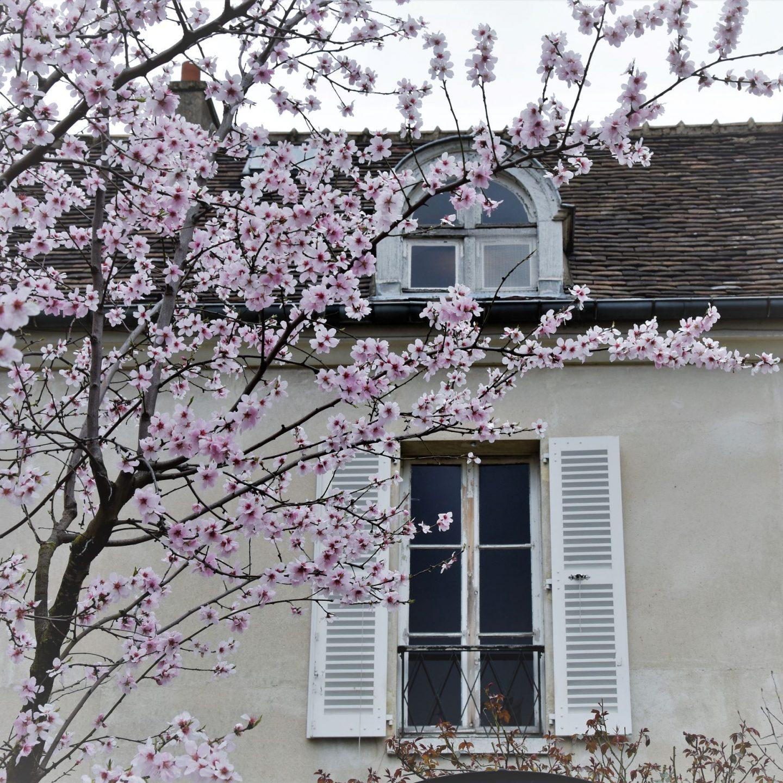 La storia di Montmartre al museo della Butte